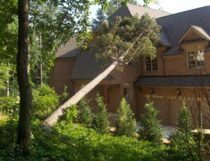 Можно ли спилить дерево во дворе?