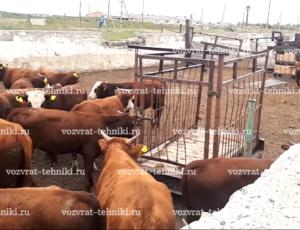 Как составить договор купли-продажи скота?