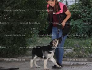 Где гулять с собакой в городе, если нет специальных площадок?