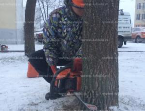Образец заявления на вырубку деревьев возле дома